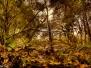 Wilhelmsburg Naturschutzgebiet Heuckenlock